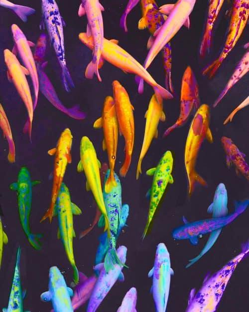 Ramzy Masri – Vibrant Rainbow Spectrum Edits – Fish
