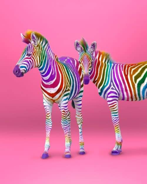 Ramzy Masri – Vibrant Rainbow Spectrum Edits – Zebras