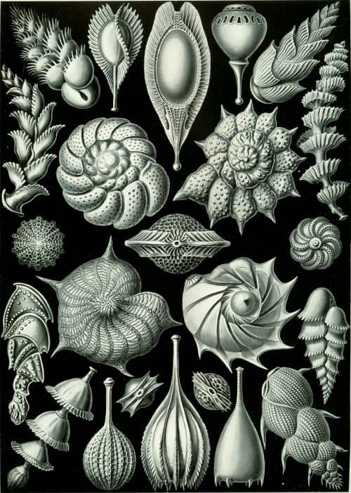 100 Beautiful Illustrations of Biologist Ernst Haeckel – Art …