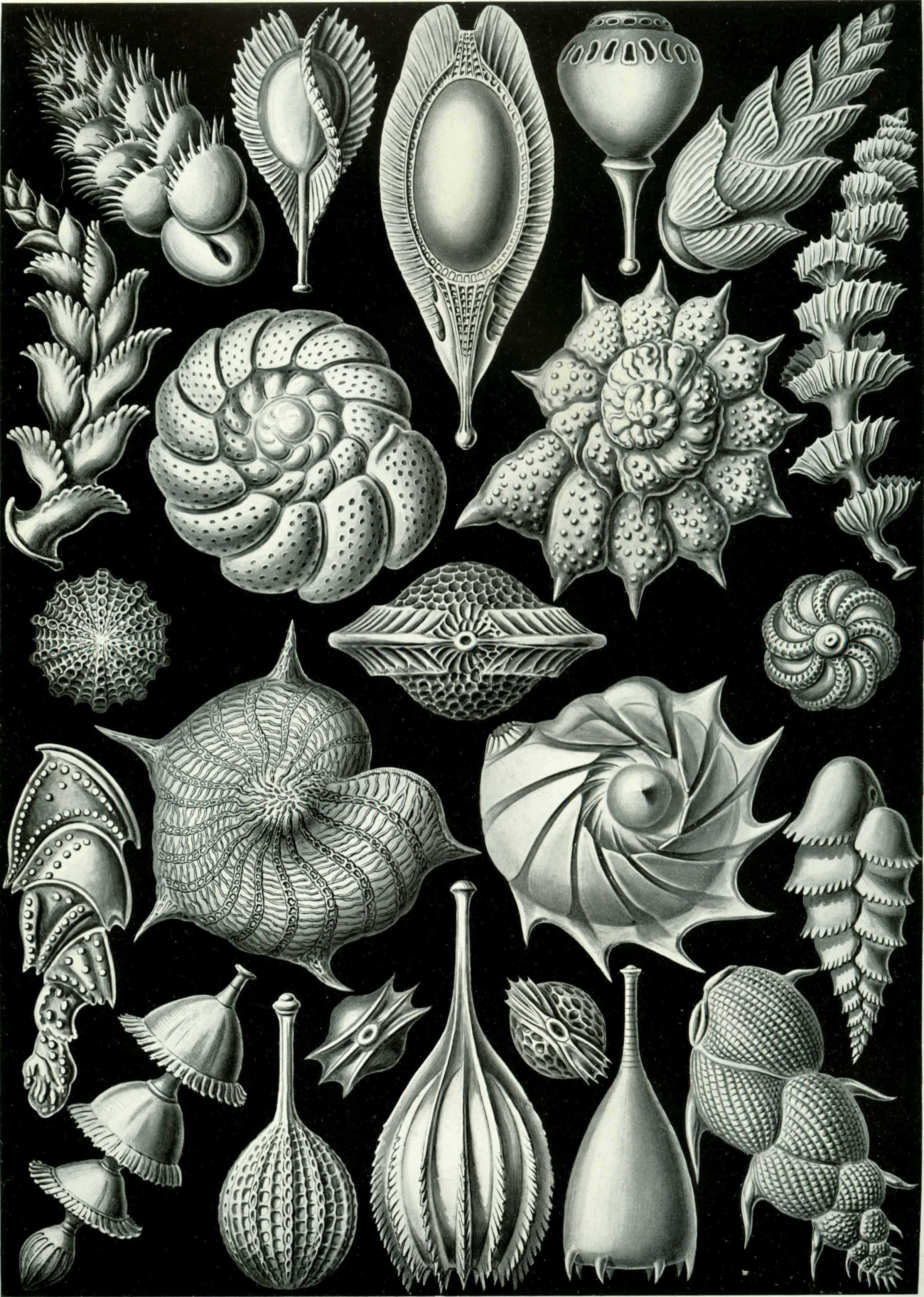 100 Beautiful Illustrations of Biologist Ernst Haeckel – Art …