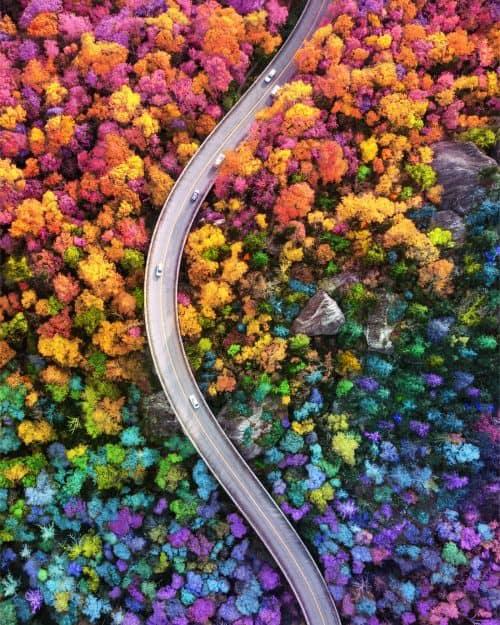 Ramzy Masri – Vibrant Rainbow Spectrum Edits – Birds Eye View of Forest Roads