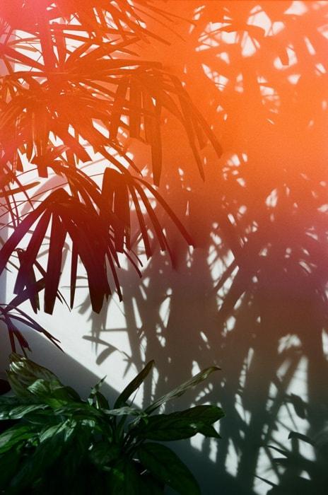Light Leak Plant Photography