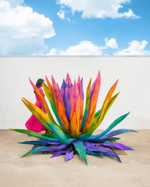 Ramzy Masri – Vibrant Rainbow Spectrum Edits – Succulent Plant