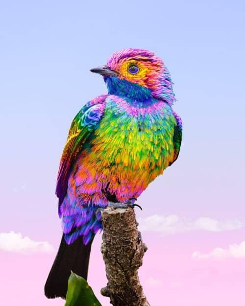 Ramzy Masri – Vibrant Rainbow Spectrum Edits – Bird