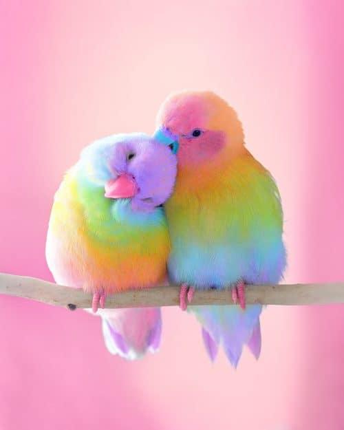 Ramzy Masri – Vibrant Rainbow Spectrum Edits – Birds