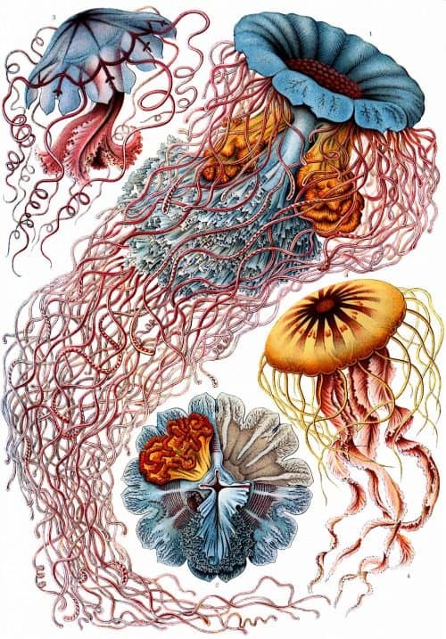 Ernst Haeckel's Art Forms in Nature