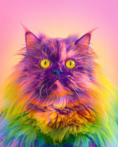 Ramzy Masri – Vibrant Rainbow Spectrum Edits – Cat