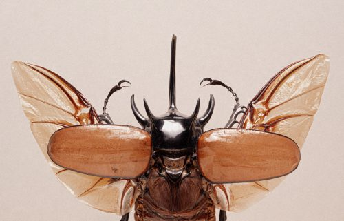 Close Up of Insects Macro Photography