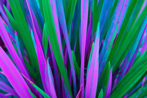 Vaporwave Floral Leaves Infrared Iridescent Photography
