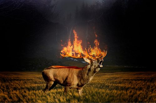 Theater Les Tanneurs Graphic Design – Fire Burning Deer