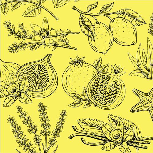 Illustrations by Travis Pietsch lemon pomegranate fruit line art