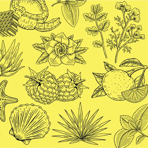 Illustrations by Travis Pietsch fruit line art sea starfish clam