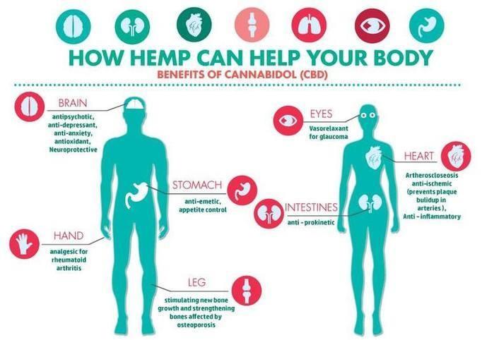 Best cannabinoids in our oils. Weed oil, CBD oil, Hemp oil. Dutch quality! De online CBD leverancier zonder THC! CBD Store Spain. Hennep Olie uit Nederland.