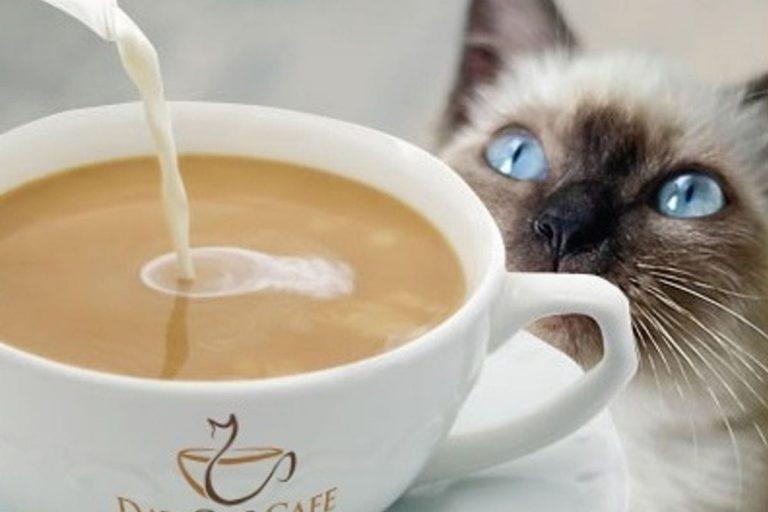 Kickstarter Campaign Might Catapult Alexandria Cat Cafe