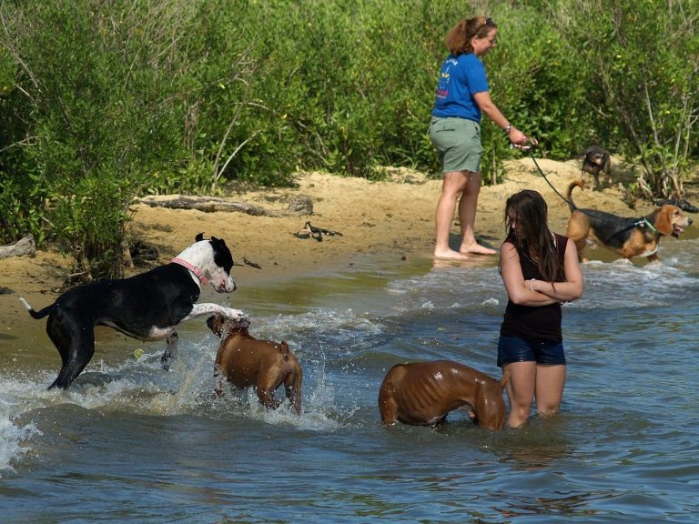 Keeping Your Pup Safe from Summer Hazards