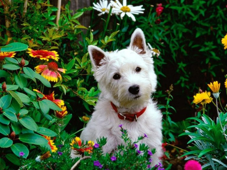 Tips and Tricks for Keeping Gardens Pet Friendly