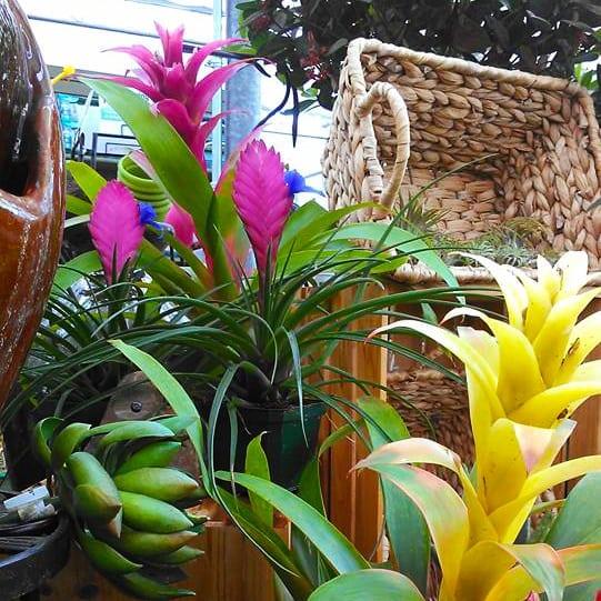 What Plants Work Best Indoors?