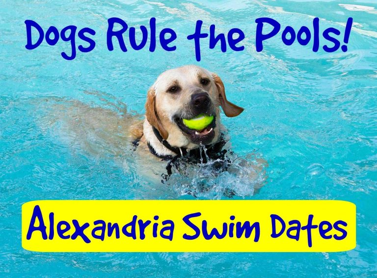 Alexandria Annual Dog Swims