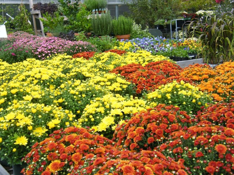 Set Change!  Bring In the Mums, Asters and Cabbages