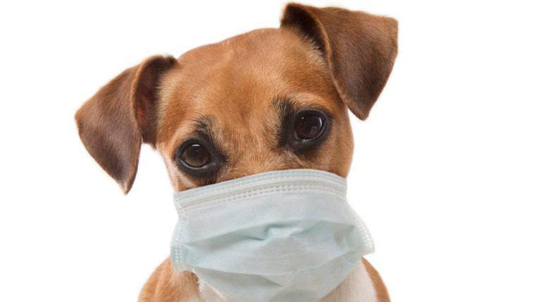 Keep You and Your Dog Healthy During Flu Season