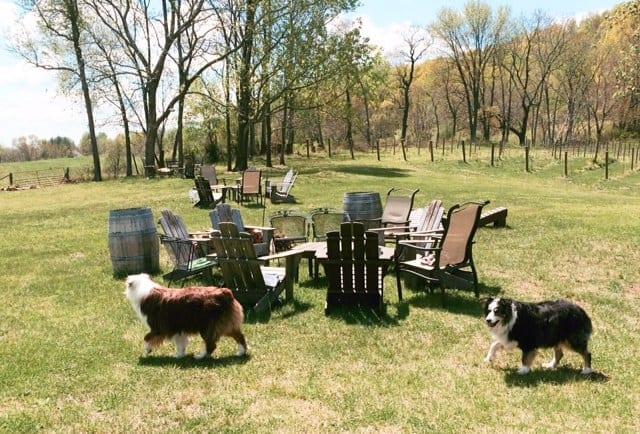 A Thanksgiving Trip to Virginia's Dog Friendly Vineyards