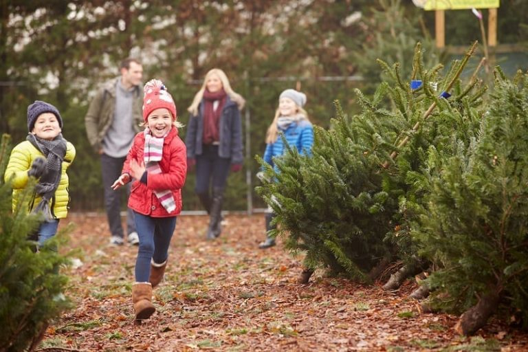 December Garden Dirt by Ray Greenstreet: Christmas Trees
