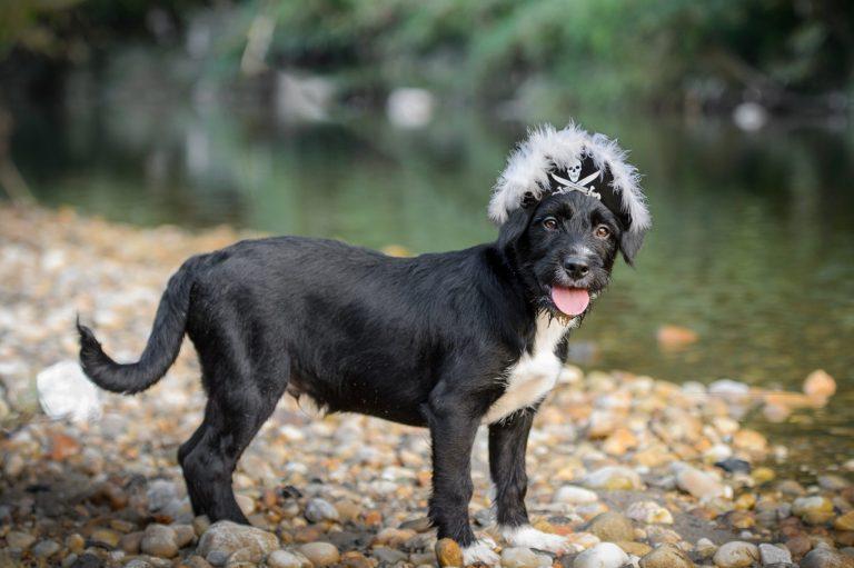 "Alexandria Rescue Dog ""Pirate"" Stars in Animal Planet's Puppy Bowl XV Sunday, February 3"