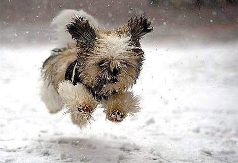 """VOTE for Your Favorite Pet Photo from """"First Snow 2019"""""""