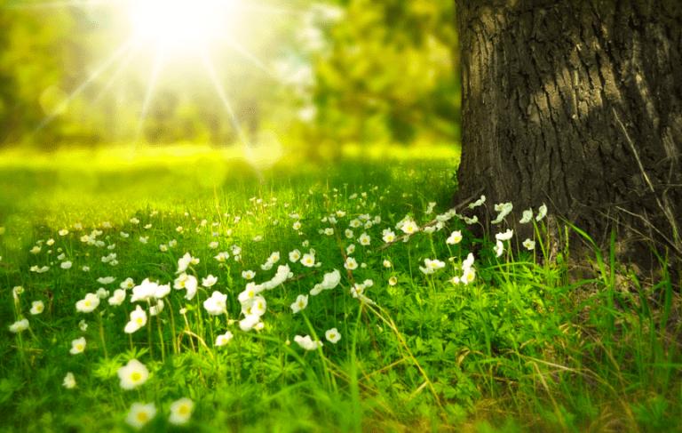 Antihistamine: A New Spring Poem By Alexandria's C. Thomas