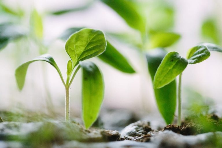 It's Now Time to Be a Seed-Starter and Here's How