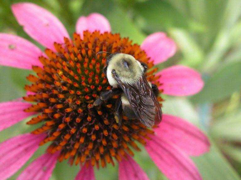In The Dirt: Pollinator Gardens