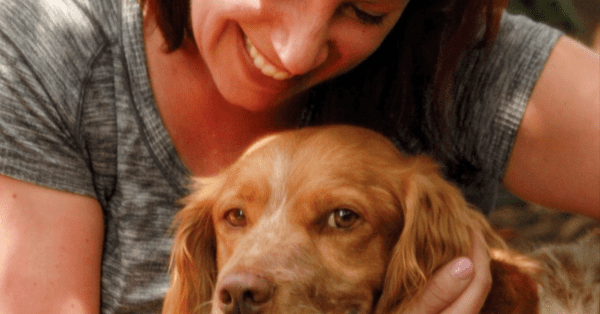 Whew! Pepon the Brittany is Found After Four Days Loose In Old Town