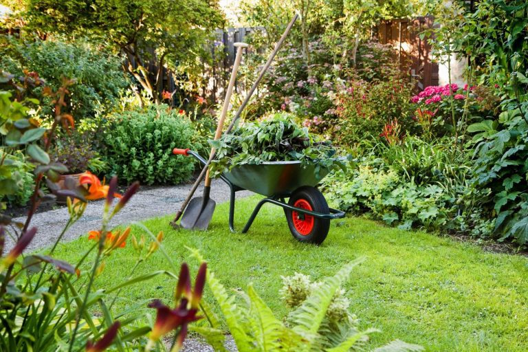 Now is the Time for Lawn Renovation