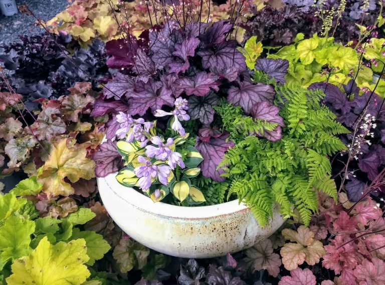 Boundless Ways to Welcome Fall to Your House and Garden