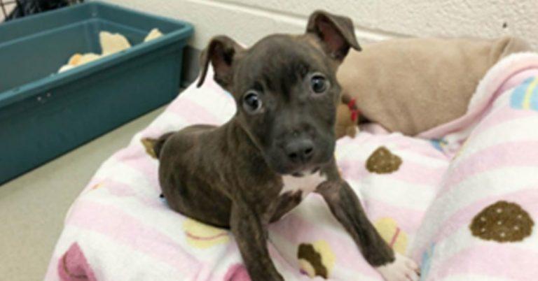 ALEXANDRIA DOG: Juju Needs Your Help