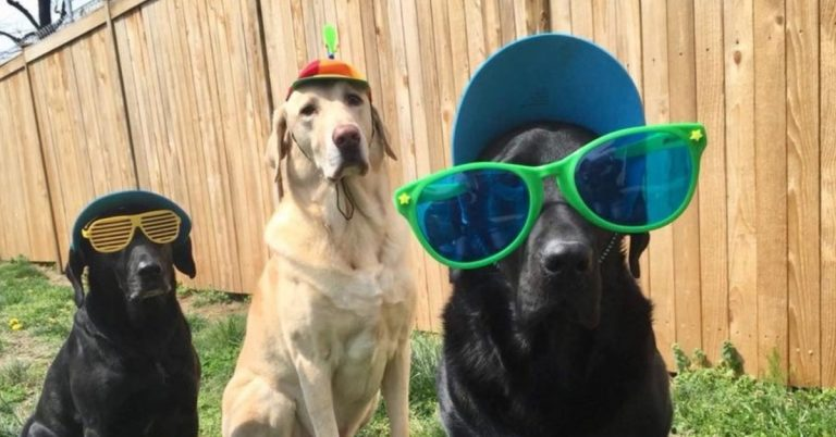Party Time: Lu's Labs Has Rescued Over 1,000 Dogs!