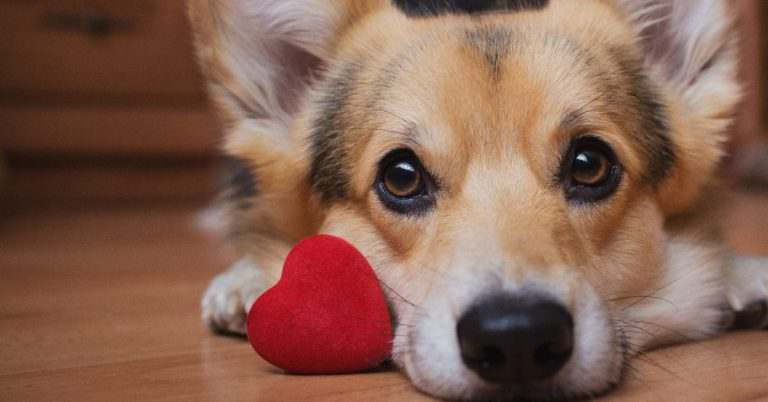 Dogs and Cats for Valentine's Delivered Right to Your Door in Alexandria!