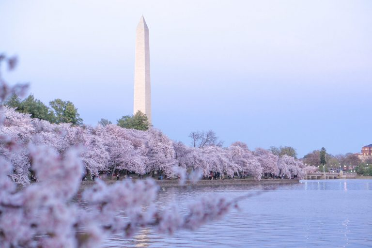 Alexandria Announces Cherry Blossom Boat and Bike Tours to D.C.