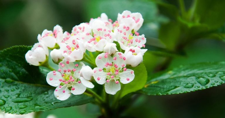 For Early Spring Blooms, Plant These Native Shrubs