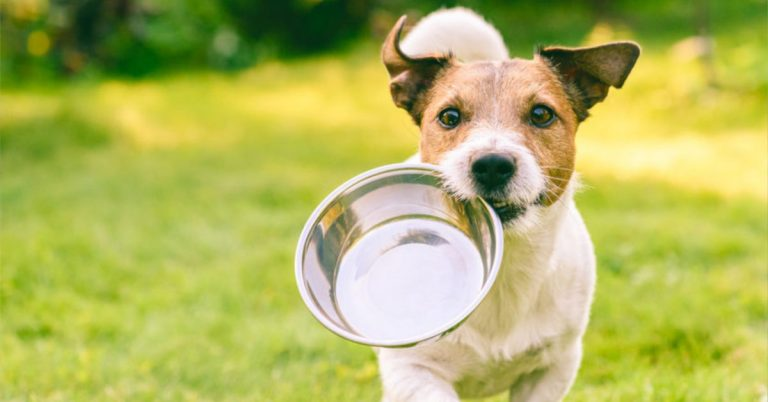 Pet Pantry Open for Alexandria Animals in Need