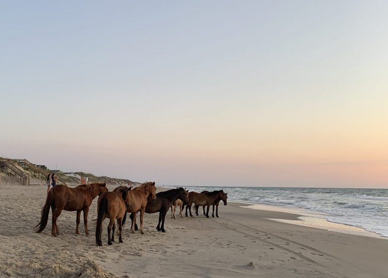 Just Horsing Around in OBX