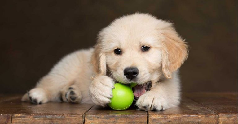 Puppy Essentials – Everything You Need for a New Puppy