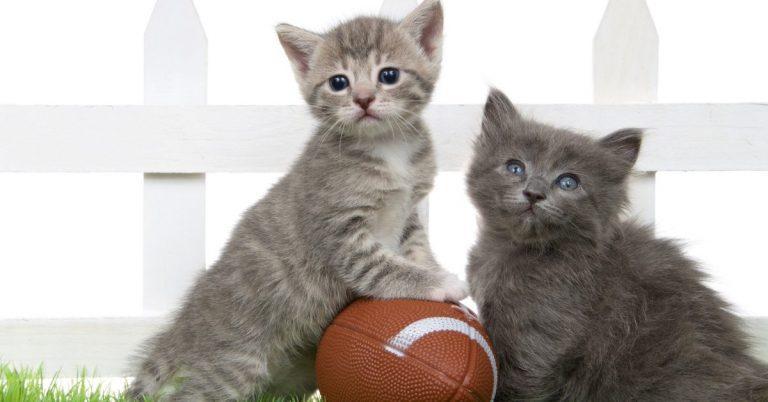 FAMILY FUN: How to Watch Alexandria's 'Great Kitten Games'