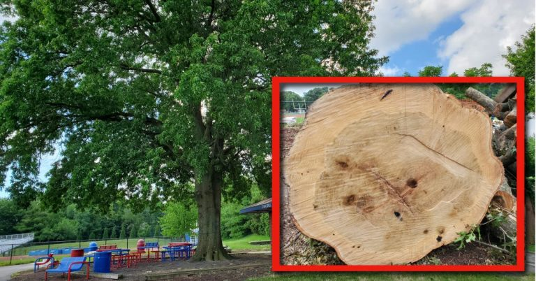 """Counting the Rings: """"T.C. Witness Tree"""" Tells the Rest of the Story"""
