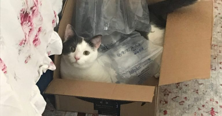 Toby Sneaks Into A Box