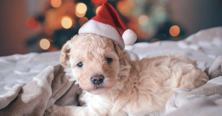 Keeping Your Dog Safe and Happy During the Holidays