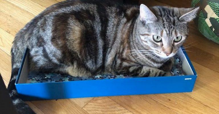 Feynman Puzzles Herself Into a Box