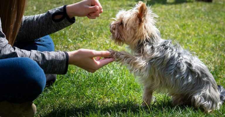 Training Your Dog is a Lifelong Journey