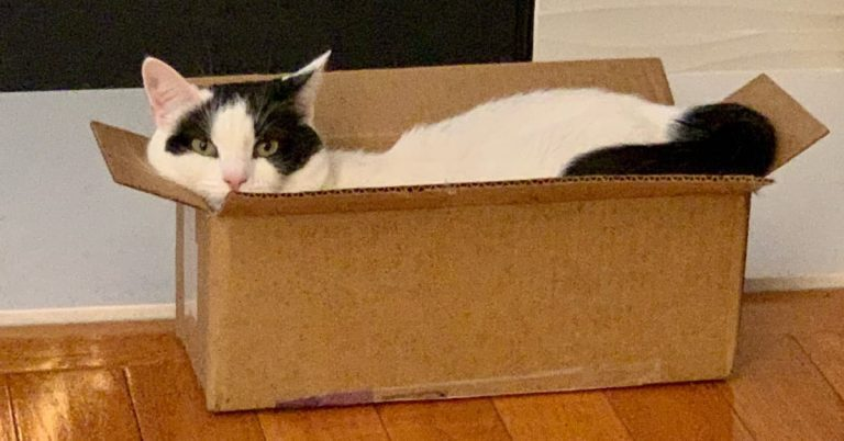 """Cat in a Box: """"I Love How Amazon Knows My Size!"""""""