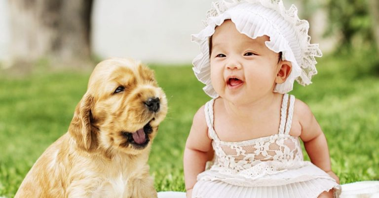 Babies and Dogs: What Could Possibly Go Wrong?